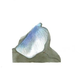 rock 113