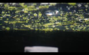 Screen Shot 2016-02-24 at 4.44.43 pm
